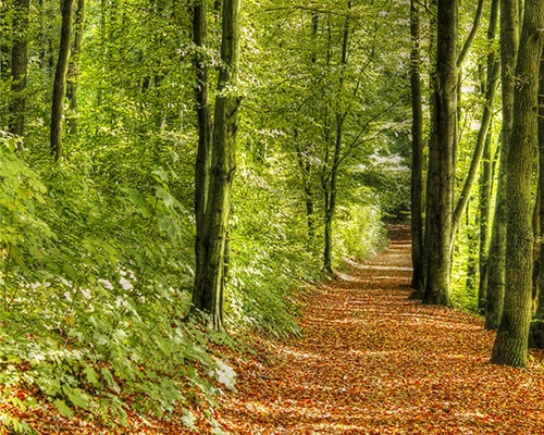 Objavte silu prírody